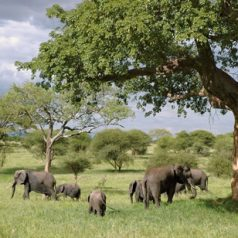 Premier sejour safari entre amis : top 3 des destinations a ne pas rater