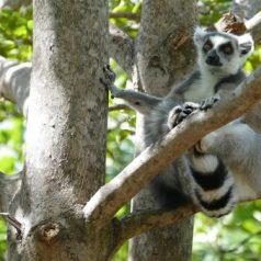 Le cadeau de Noël parfait : un Voyage Madagascar all inclusive