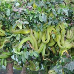 La ferme aux serpents de Dong Tam
