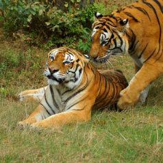 » Le serengeti : le park et ses espèces animales à voir «