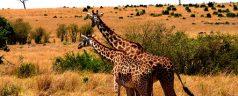 wildlife-1536577__340