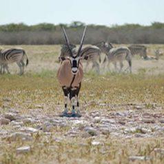 2 endroits incontournables à inclure dans un itinéraire de voyage en Namibie