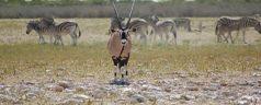 Etosha_National_Park,_Namibia