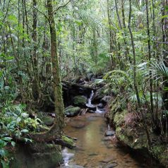 Voyager en Malaisie pour découvrir ses attractions dignes d'intérêt