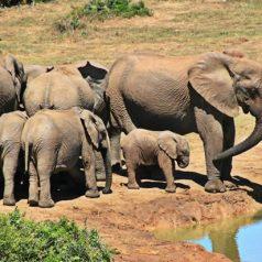 Les 5 meilleures choses à faire en Afrique du Sud