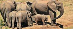 nature afrique du sud