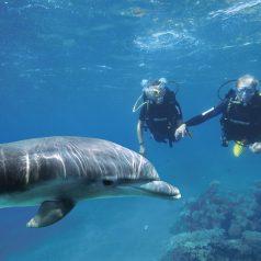 Plongée à Rangiroa : 4 espèces sous-marine que vous pouvez être sûr de croiser