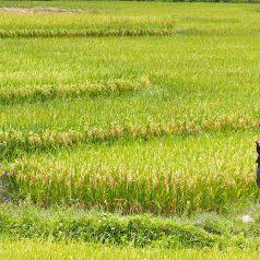 Quelle est la meilleure saison pour voyager au Vietnam ?