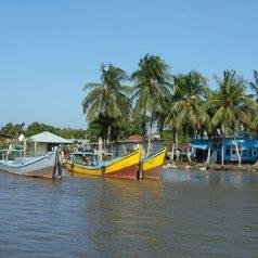 Premier séjour au Suriname : les choses à voir sans délai