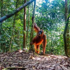 Visiter Bukit Lawang : comment réussir son séjour ?