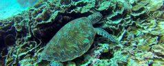 Les meilleurs spots pour faire de la plongée sous-marine en Tanzanie