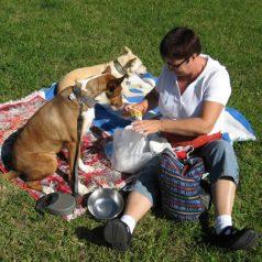 Voyager avec son chien : top 3 des destinations à privilégier