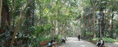 Parque_Trianon_-_São_Paulo,_Brazil