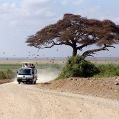 Road trip en Namibie : comment le préparer ?