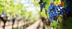 Voyage œnologique : découvrir quelques vignobles en Argentine